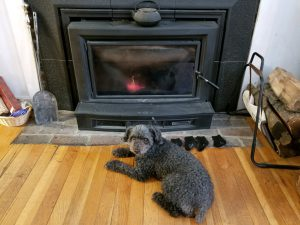 Bonnie warming up at fireplace 11/28/18 after being out in the cold. Photo by Charles Oropallo.